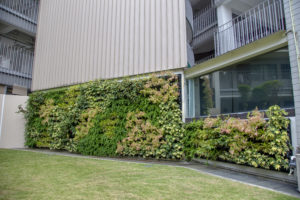 Green Wall Installation at PathLight School