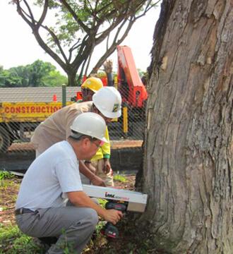 Arborist Singapore