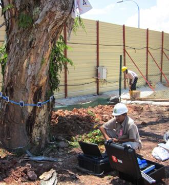 Arborists Singapore