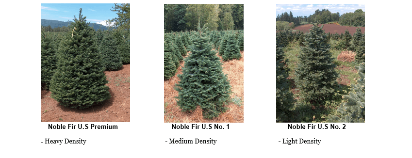 Real Christmas tree Noble Fir U.S Premium