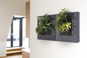 LivePictureGO GREY & BLACK in Living Room