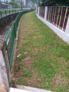 Before Re-Turfing along Roadside at Residential Property