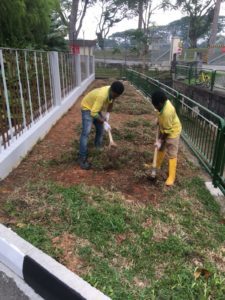 Re-Turfing Process along Roadside at Residential Property