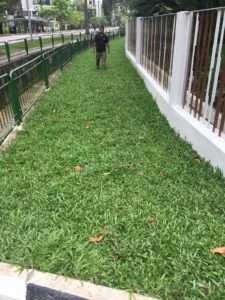 Re-Turfing along Roadside at Residential Property