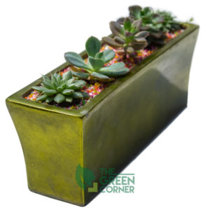 Train of Succulents Product