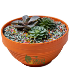 Succulent Garden | The Green Corner