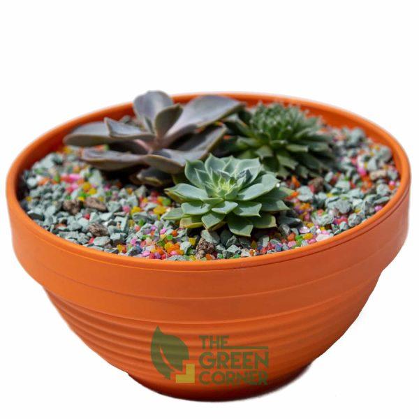 Succulent Garden | The Green Corner