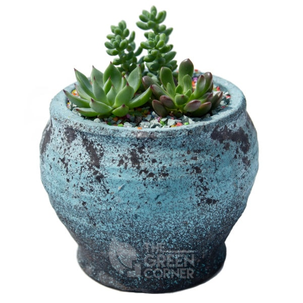 Succulent Sanctuary | The Green Corner