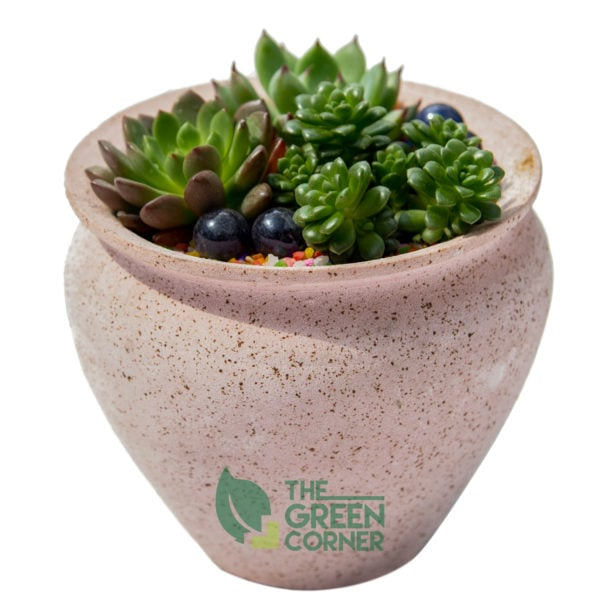 Sweet Succulents | The Green Corner