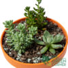 Succulent Forest Close-Up | The Green Corner