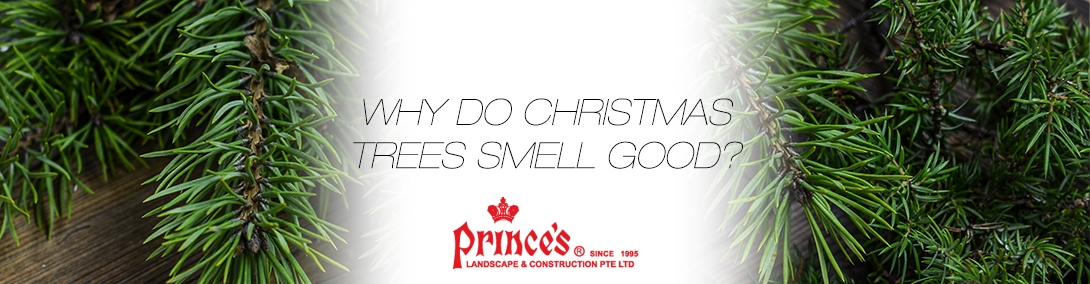 Christmas Trees Smell Banner Post