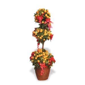 Four Season Kumquat Multi Tier