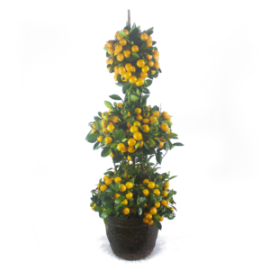 Lucky plants four season multi-tier