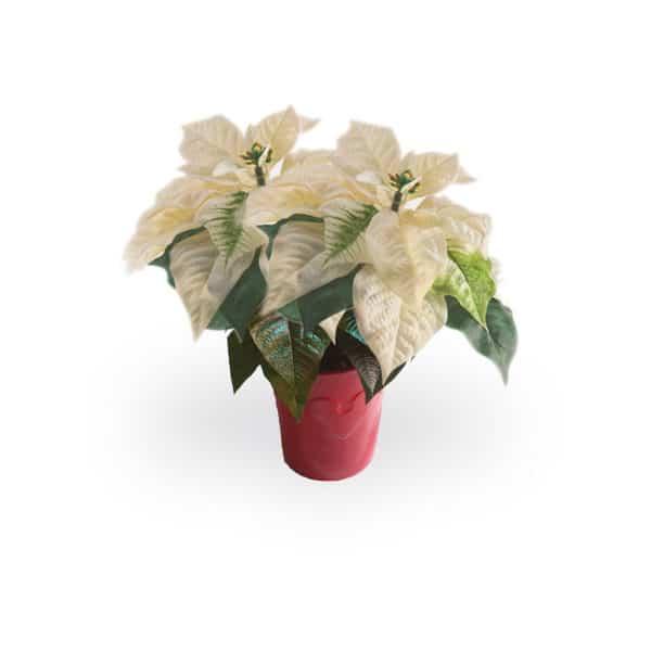 White Poinsettia Product