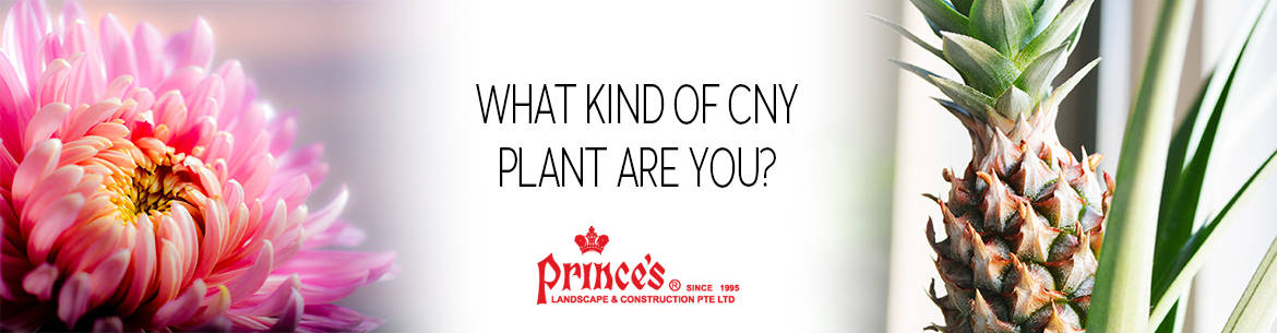 What CNY Plant Are You Banner