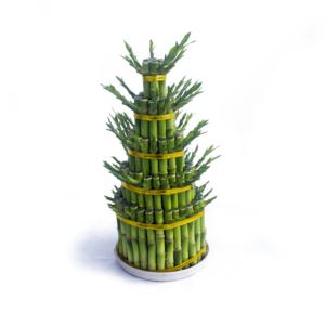 Lucky Bamboo 5 Layers