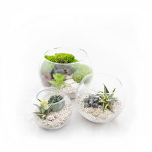 Terrarium Bowl Group