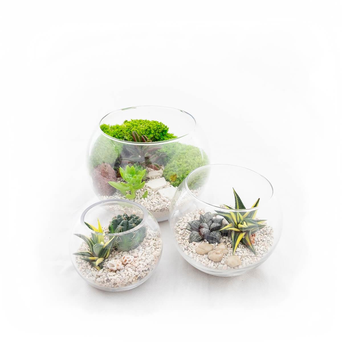 Terrarium Bowls Package Xs S M Prince S Landscape Pte Ltd