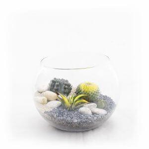 Bowl M Terrarium