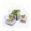 Cuboid Terrarium Group