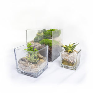 Cuboid Terrarium Group