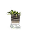 Sanseviera Black Terra Pot & Metal Stand