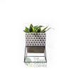 Sanseviera White Terra Pot & Metal Stand