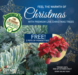 Christmas Promo - 1200x1200-01